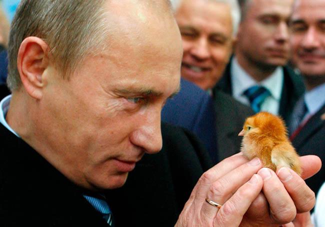 Loạt khoảnh khắc đời thường ấn tượng của Tổng thống Putin