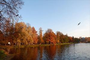 Cung điện mùa thu nước Nga đẹp mê hồn