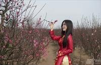 Mãn nhãn thiếu nữ Hà Thành đọ sắc bên hoa đào
