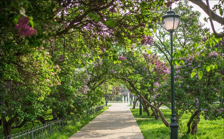 Mátxcơva mùa hoa nở: Top 7 điểm ''sống ảo'' không thể không chia sẻ ngay